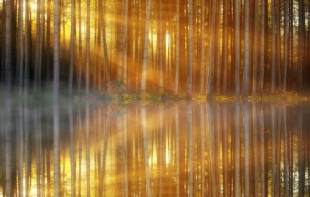森林光照 树木 湖泊 倒影6k风景高端电脑桌面壁纸