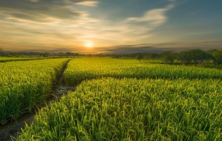 桂林会仙湿地稻田4k风景高端电脑桌面壁纸