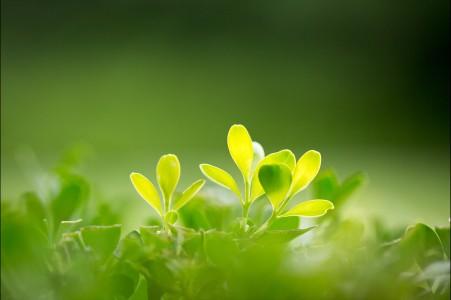 大自然绿色树叶护眼4k高清高端电脑桌面壁纸