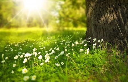 阳光明媚的草地树鲜花4K风景高端电脑桌面壁纸
