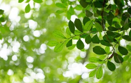 自然绿色树叶背景护眼4k高清高端电脑桌面壁纸3840x2160