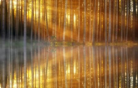 森林光照4k风景高端电脑桌面壁纸3840x2160