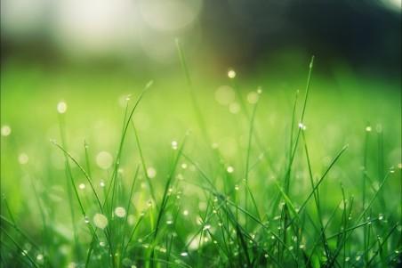 绿色草地 露水 夏 太阳 护眼4k高端电脑桌面壁纸