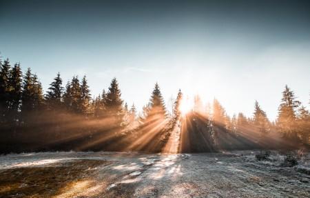 冬季森林冰冻早晨阳光4k风景高端电脑桌面壁纸