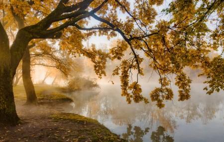 秋天的早晨 晨雾 黄叶 4k风景高端电脑桌面壁纸3840x2160