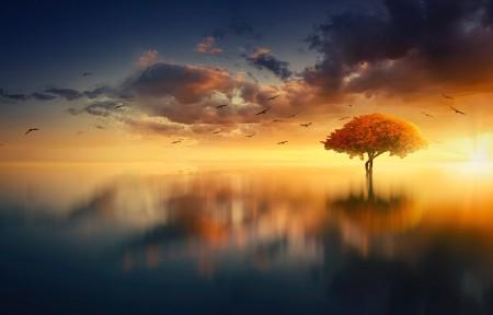 日落 树木 风景 地平线 4K自然高端电脑桌面壁纸