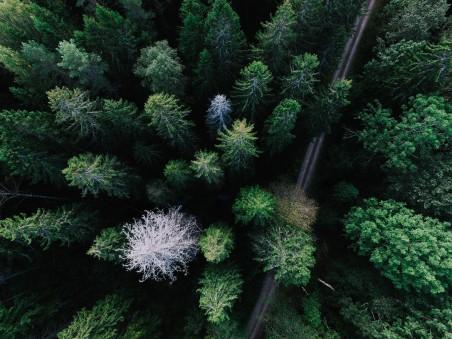 俯视森林公路高清照片4k风景高端电脑桌面壁纸