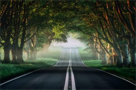 路 薄雾 自然森林 春天 小径 4K风景壁纸