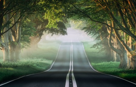 榕树路 薄雾 森林 自然风景3440x1440壁纸