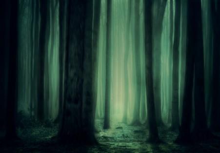 森林 树 雾 神秘 黑暗 如梦如幻 童话 神奇 魔术 唯美5k背景图片
