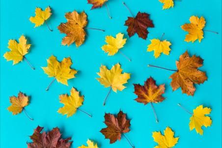 蓝色背景下的秋季树叶4k图片