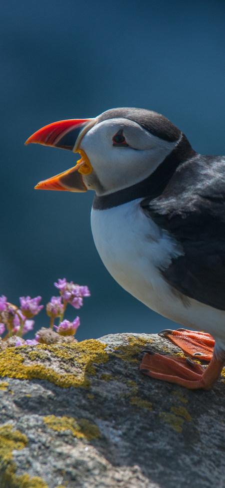北极燕鸥4K高清手机壁纸推荐