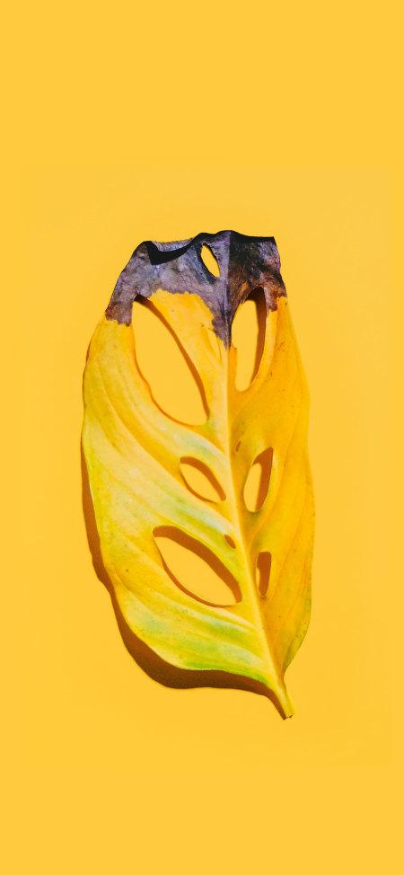 枯黄的树叶极品游戏桌面精选4K手机壁纸