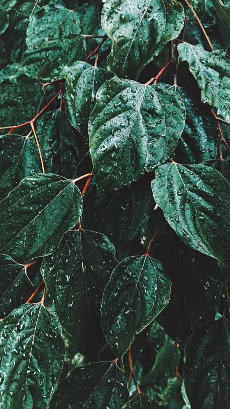 绿叶上的雨水极品游戏桌面精选4K手机壁纸