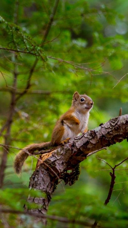 树上的小松鼠极品游戏桌面精选4K手机壁纸