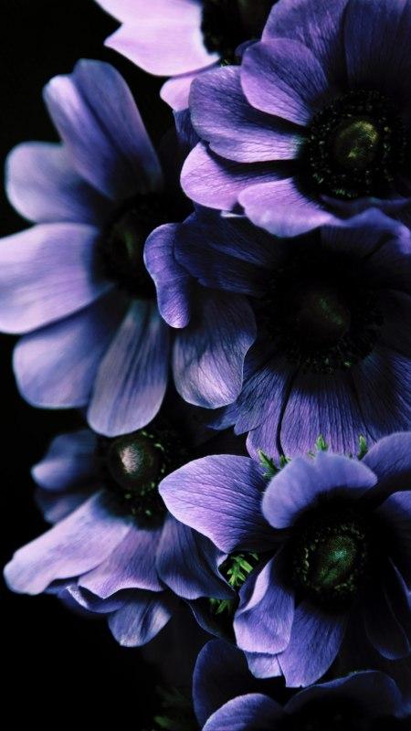 紫色花朵极品游戏桌面精选4K手机壁纸