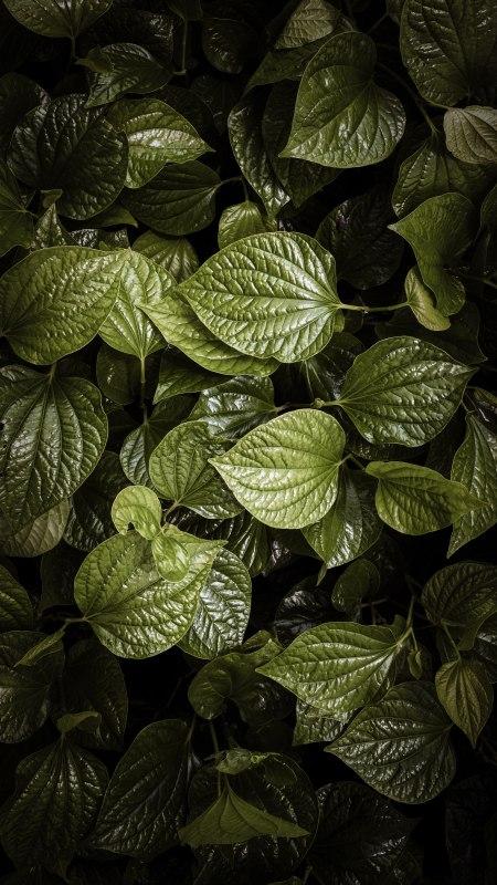 植物绿叶极品游戏桌面精选4K手机壁纸