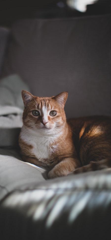 橘猫4K高清手机壁纸推荐
