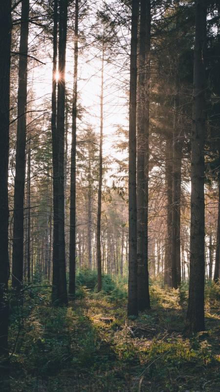 森林 阳光 灌木丛4K高清手机壁纸精选