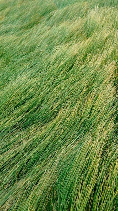 风吹绿草低极品游戏桌面精选4K手机壁纸