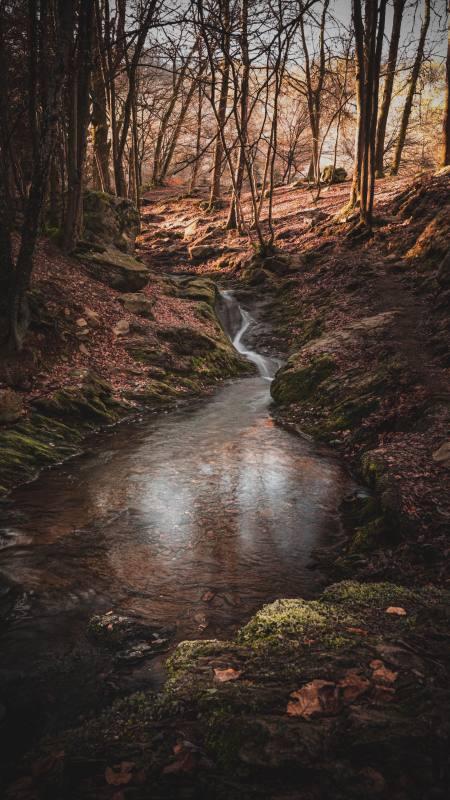 树林里的小溪4K高清手机壁纸精选