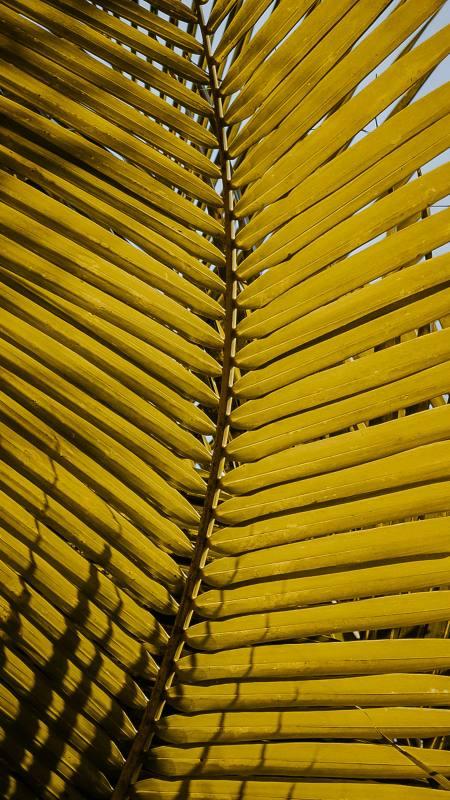 黄色树叶极品游戏桌面精选4K手机壁纸
