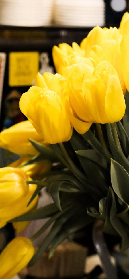 黄色郁金香极品游戏桌面精选4K手机壁纸