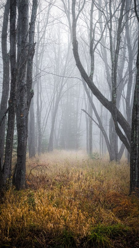 雾中的森林极品游戏桌面精选4K手机壁纸
