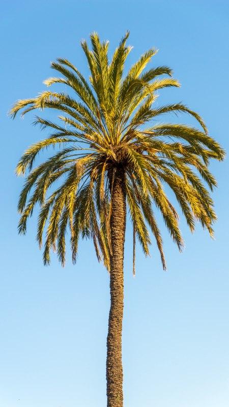 棕榈树极品游戏桌面精选4K手机壁纸
