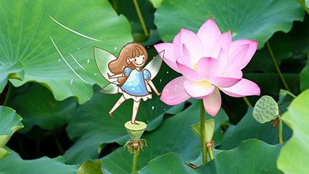 夏季,美丽,童话,粉红色的荷花,插图高端桌面精选 3840x2160