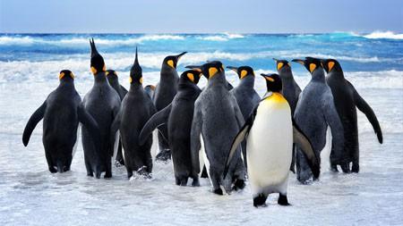 南极洲,海洋,大陆,皇帝企鹅高端桌面精选 3840x2160