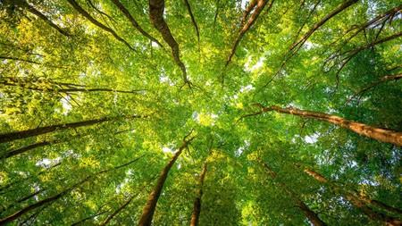 树木的阳光叶子,2021,森林的树枝,5K,超高清,照片高端桌面精选 3840x2160