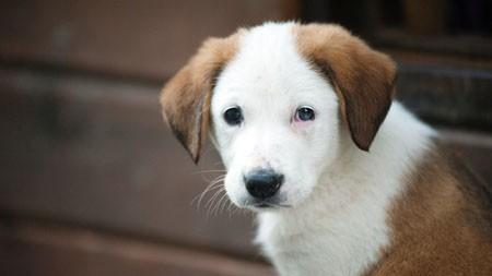 动物,可爱,狗,4K,高清,照片高端桌面精选 3840x2160