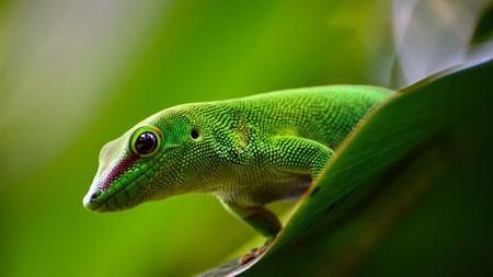 壁虎,蜥蜴,爬行动物,2022,动物,高清,照片高端桌面精选 3840x2160