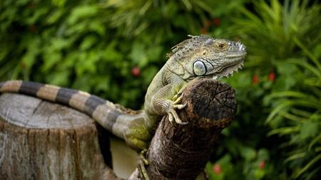 变色龙,蜥蜴,2022,动物,高清,照片高端桌面精选 3840x2160