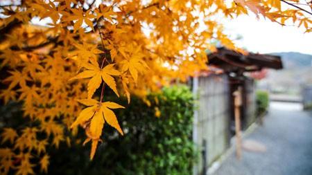 日本,秋天,木房子,枫叶,摄影极品壁纸精选 3840x2160