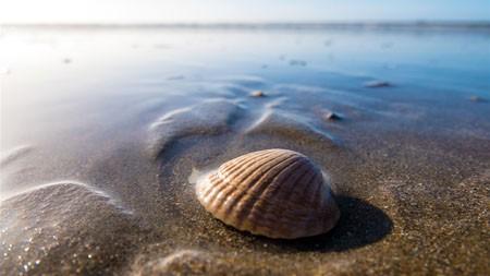沙滩,沙滩,海边,外壳,野生动物,天际线高端桌面精选 3840x2160