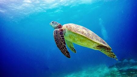 蓝色,海洋生物,乌龟,高清,摄影高端桌面精选 3840x2160