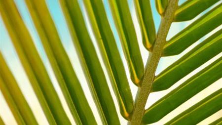 树,绿色,分支,植物,阳光极品壁纸精选 3840x2160
