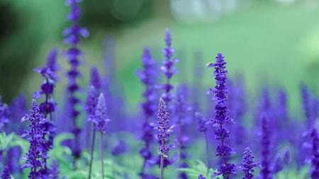 紫色,薰衣草,户外,摄影,4K,高清极品壁纸精选 3840x2160