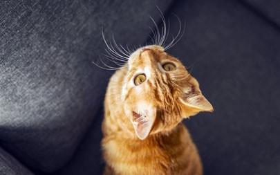 可爱,宠物,猫,2021,动物,5K,高清,照片高端桌面精选 5120x2880