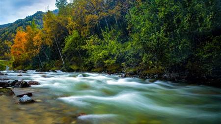 原始的生态,森林,净化,河,景观高端桌面精选 3840x2160