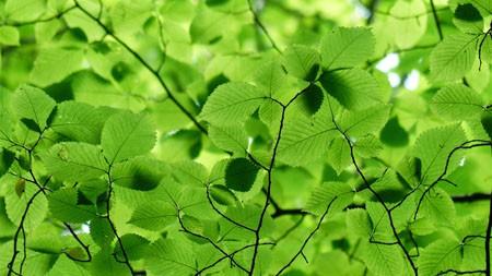 树枝,绿色,叶子,植物,阳光高端桌面精选 3840x2160
