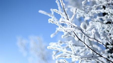 冬天,丛林,冻结,树枝,高清,照片高端桌面精选 3840x2160