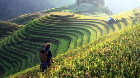 中国,夏季,水稻,早上,阳光,景观高端桌面精选 3840x2160