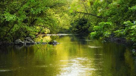 春天,森林,眩光,河,2022,自然,风景,照片高端桌面精选 3840x2160