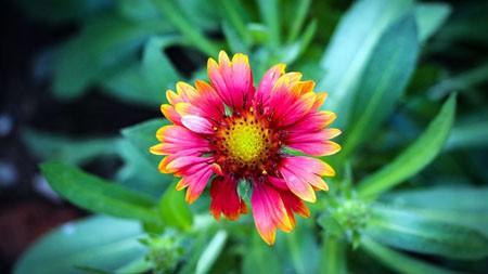 2022,粉红色,盛开,鲜花,绿色,花瓣,HD极品壁纸精选 3840x2160