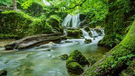 绿色,丛林,河流,苔藓植物,4K,高清,照片高端桌面精选 3840x2160