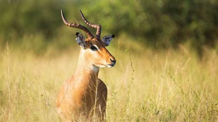 棕色,羚羊,草地,2022,动物,高清,摄影百变桌面精选 3840x2160