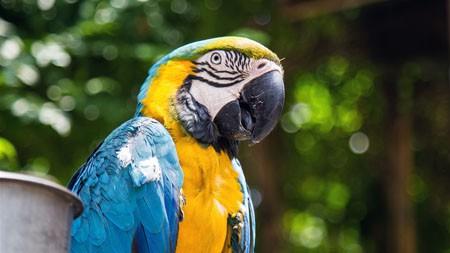 鹦鹉,鸟,2022,高品质,照片高端桌面精选 3840x2160